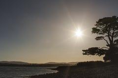 Le soleil et l'arbre au rivage Photos libres de droits