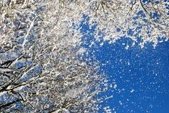 Le soleil et neige d'hiver Photographie stock