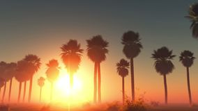 Le soleil et paumes rougeoyants de brouillard banque de vidéos