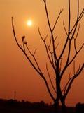 Le soleil et un arbre Photos libres de droits