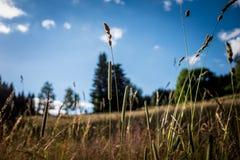 Le soleil extérieur d'herbe images stock