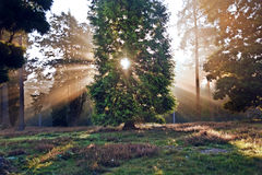 Le soleil inspiré d'aube a éclaté par des arbres Photos stock