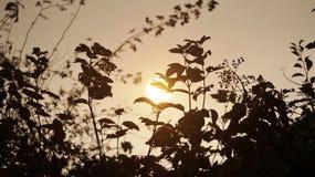 le soleil jaune lumineux Photo libre de droits
