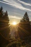 le Soleil Levant entre le pin deux photographie stock