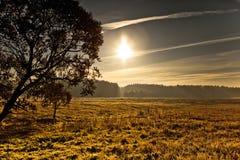 Le soleil lumineux avec l'arbre et l'herbe Photos stock
