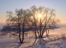 Le soleil par les branches des arbres en hiver images stock
