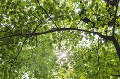 Le soleil par les feuilles Photographie stock libre de droits
