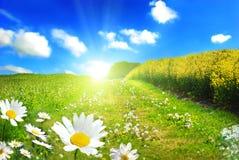 Le soleil parfait photos stock