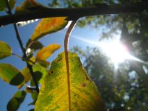 Le soleil, qui décompose l'automne photos libres de droits