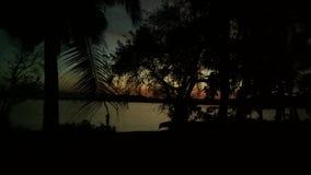 le soleil réglé derrière les arbres photos libres de droits