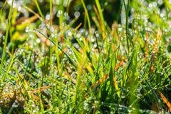 Le soleil, rosée et herbe de matin image stock