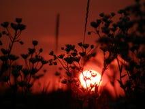 Le soleil rouge Photo libre de droits