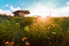Le soleil Thaïlande de fond de montagnes de fleur Photographie stock libre de droits