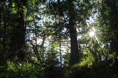 Le soleil traverse les arbres Photos stock