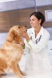 Le som är veterinär- med hunden royaltyfri fotografi