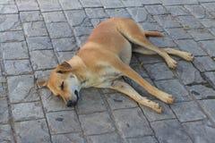 Le sommeil brun de chien sur le passage couvert image libre de droits
