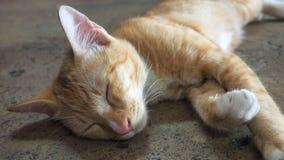 Le sommeil de chat bourdonnent dedans Image libre de droits