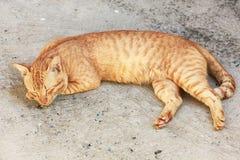 Le sommeil de chat se tapissent sur le plancher Photos libres de droits