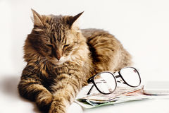 Le sommeil se reposant de chat mignon sur la table avec des verres téléphonent et argent, Images stock