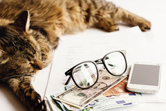 Le sommeil se reposant de chat mignon sur la table avec des verres téléphonent et argent, Images libres de droits