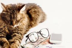 Le sommeil se reposant de chat mignon sur la table avec des verres téléphonent et argent, Photographie stock libre de droits