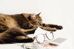 Le sommeil se reposant de chat mignon sur la table avec des verres téléphonent et argent, Photo stock
