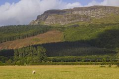 Le sommet majestueux de montagne de Binevenagh près de Limavady dans le comté Londonderry sur la côte du nord de l'Irlande du Nor Image libre de droits