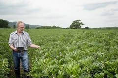 Le spazzole di Holding Tablet Computer dell'agricoltore consegnano le piante Fotografia Stock Libera da Diritti