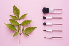 Le spazzole di trucco su un fondo di rosa pastello con la pianta va Concetto di bellezza Fotografia Stock Libera da Diritti