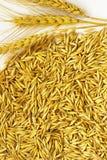 Le spighette di grano e dell'avena hanno sparso su una tavola Fotografia Stock
