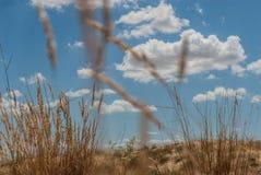 Le spighette si sviluppano in sabbia Fotografia Stock