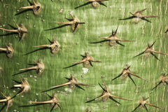 Le spine del cactus Fotografie Stock
