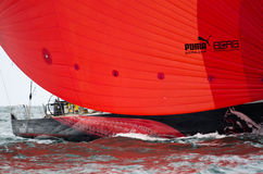 Le spinnaker rouge du puma dans la course d'océan de Volvo Photographie stock