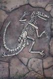 Le squelette d'un dinosaure photographie stock