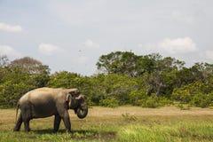 Le Sri Lanka Photographie stock libre de droits