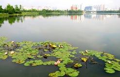 Le stationnement de lac de lis d'eau Image libre de droits
