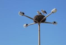 Le stationnement des cigognes Images libres de droits