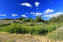 Le parc national grand de Teton images libres de droits