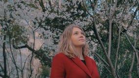 Le steadicam de cardan a tiré de la fille blonde attirante dans une position rouge de manteau dans l'allée de Sakura, appréciant  banque de vidéos