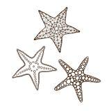 Le stelle marine hanno messo 2 Fotografia Stock