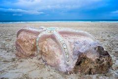 Le stelle marine scolpiscono sulla spiaggia Fotografia Stock Libera da Diritti