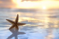 Le stelle marine sgranano nel mare sulla priorità bassa di alba Immagine Stock