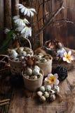 Le studio a tiré des oeufs de caille sur un fond en bois de vintage Image libre de droits