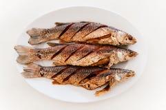 Le style thaïlandais a cuit des poissons à la friteuse de mulet du plat blanc et de la table blanche photos libres de droits