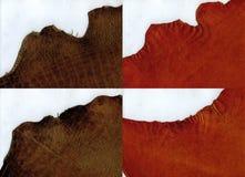 Le suède de terre cuite de bords en lambeaux et le crocodile brun garnissent en cuir la texture Image libre de droits