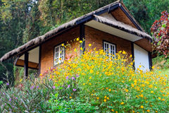 Le sulphureus de cosmos et le tuberosa de Ruellia fleurit dans un jardin Photo libre de droits