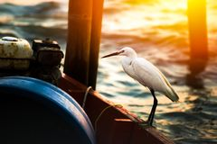 Le support de héron sur le bateau de pêche image stock