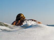 Le surfer barbote par la mousse pour attraper une onde photos stock