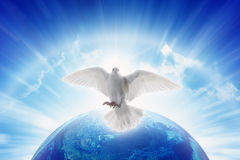 Le symbole de colombe de blanc de l'amour et de la paix vole au-dessus de la terre de planète Photos libres de droits