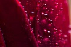 Le symbole de l'amour et photo de pétales de rose rouges romantiques de sentiments de la macro avec de l'eau chute Photos stock